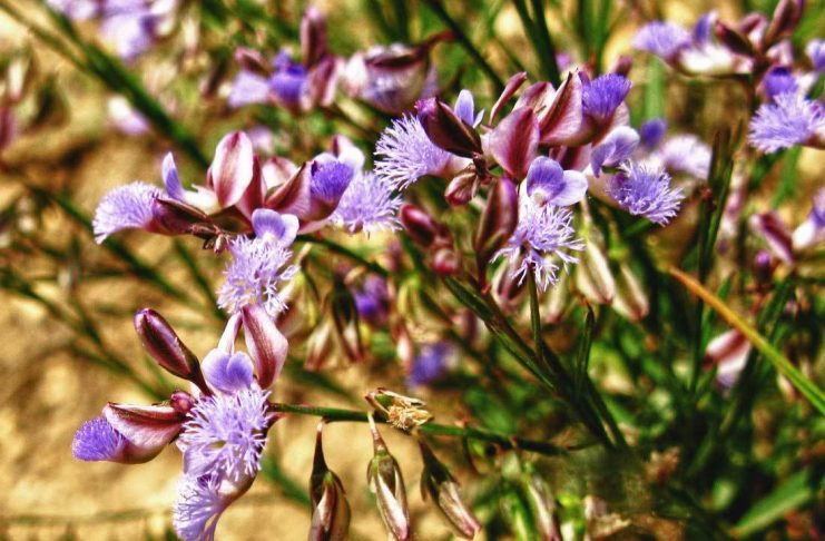 A-Z List of Medicinal Herbs and Their Uses (Healing Herbs)